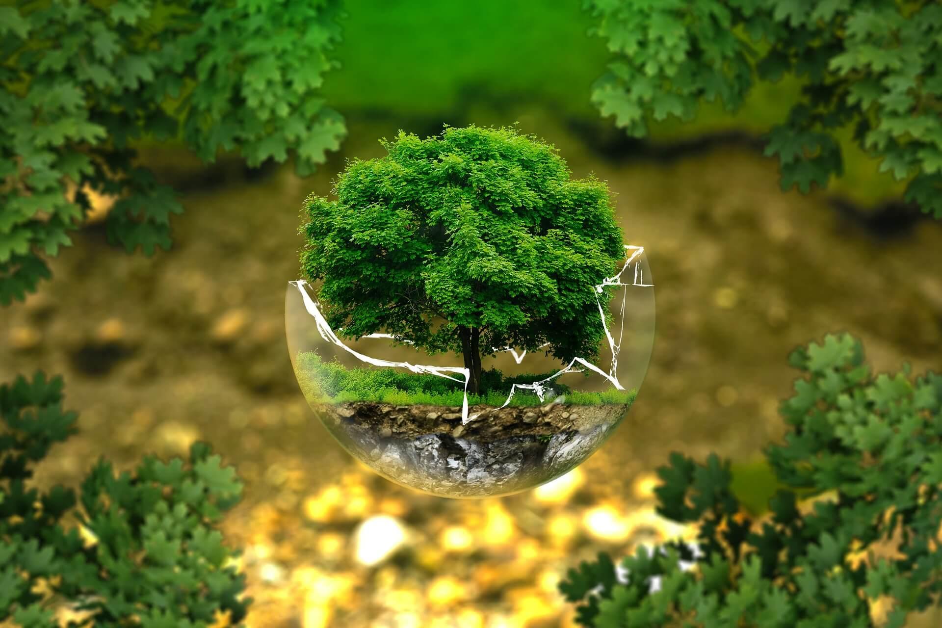 Alerta Legal M&B Regulación y Medioambiente | Gobierno presenta Proyecto de Ley sobre Delitos Ambientales y que promueve un Sistema de Prevención de Daños al Medioambiente